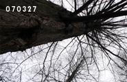 070327_2.jpg