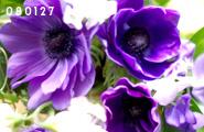080127_2.jpg