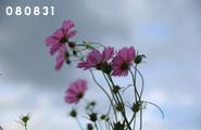 080831_3.jpg