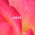 0829_2.jpg
